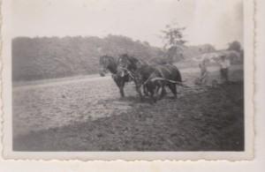 Landbewerking met paarden
