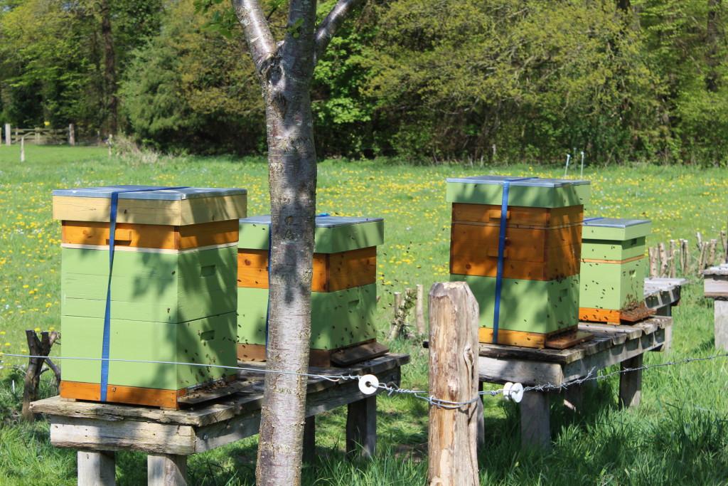 Bijenvolken mei 2015