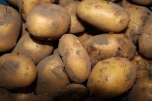 Nieuwe aardappels