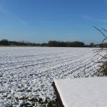 Winterrogge akker in de sneeuw