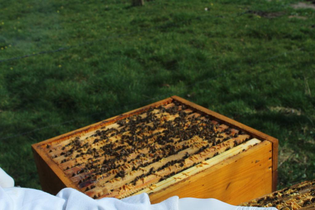Bijenvolk begin april