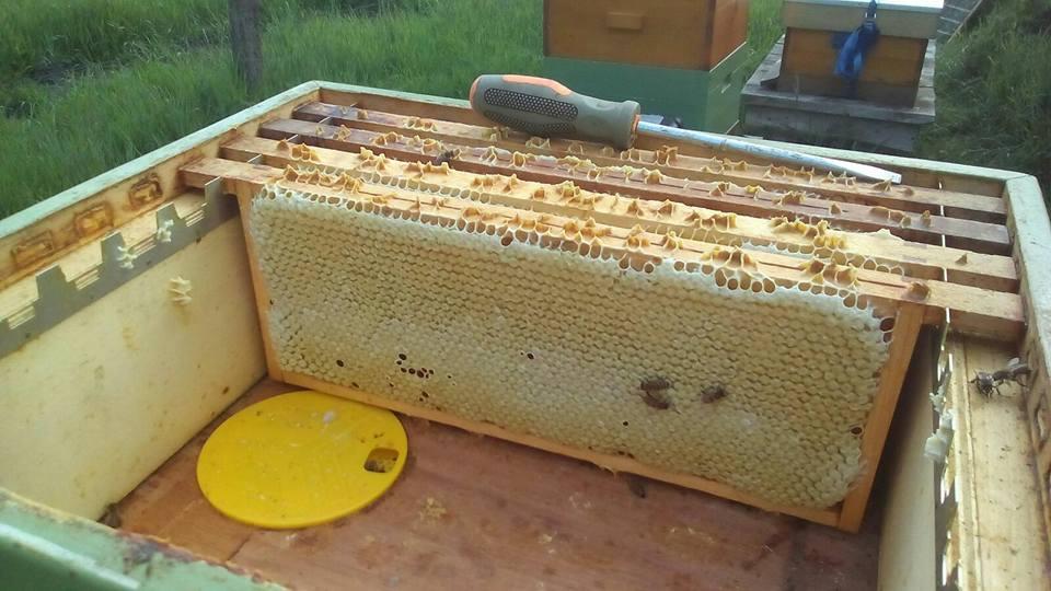 Honingkamer op de kast met verzegelde ramen.